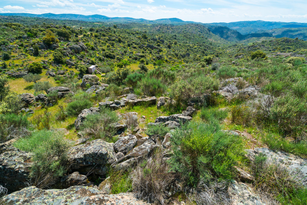 Faia Brava, Côa Valley, Western Iberia, Portugal, Europe, Rewilding Europe