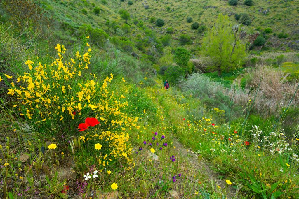 Ribeira de Piscos, Côa Valley, Western Iberia, Portugal, Europe, Rewilding Europe