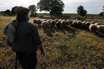 Shepherd, Campanario de Azába, .Salamanca region, Castilla y León, Spain